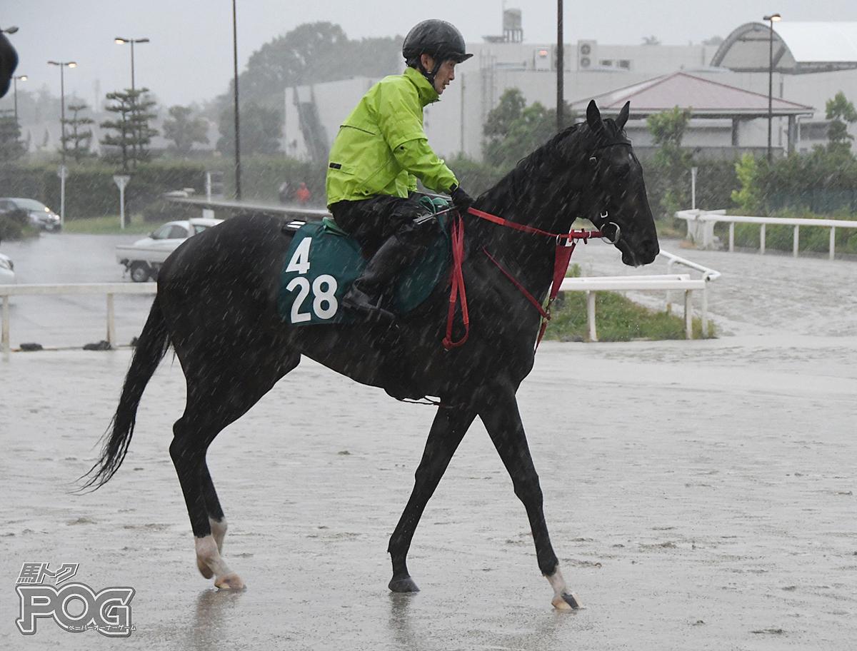 バルドーリアの馬体写真