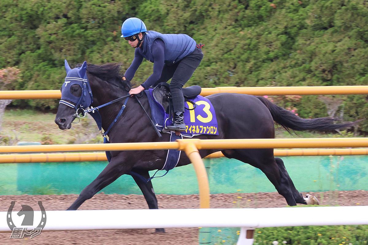 マイネルファンロンの馬体写真