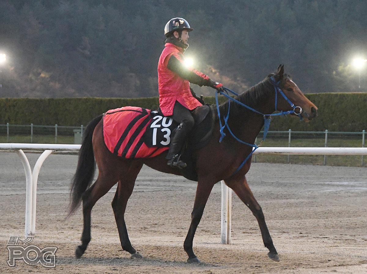 エイシンデネブの馬体写真