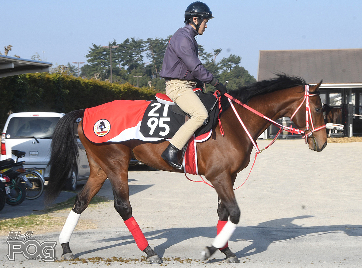 アイムワンの馬体写真
