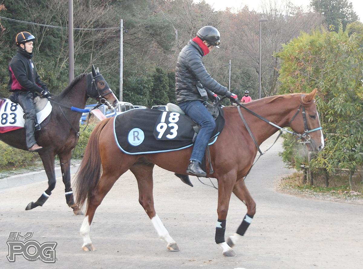 オーミシェルーの馬体写真