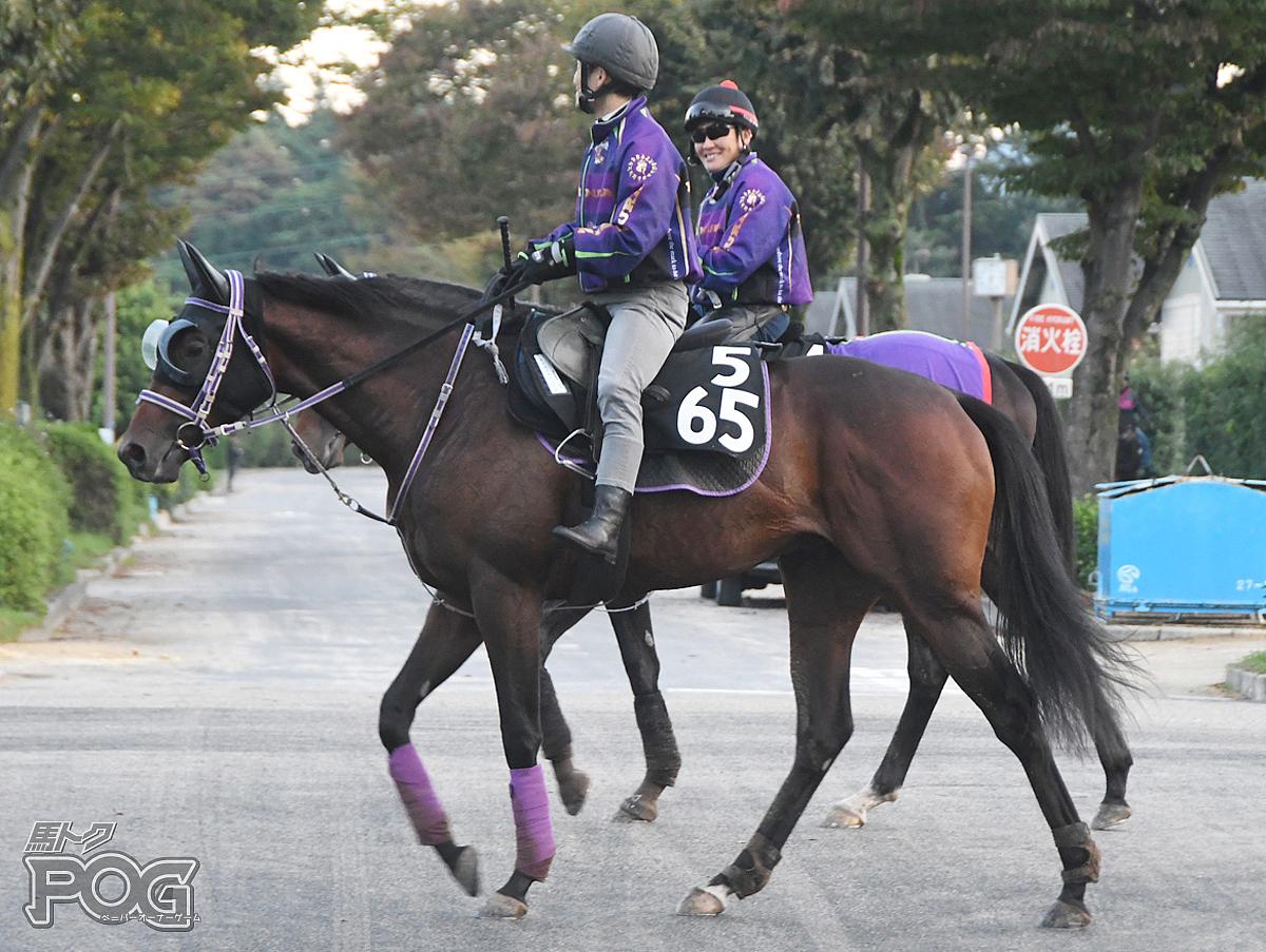タイセイアベニールの馬体写真