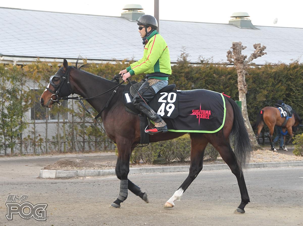 ゼンノカムレイドの馬体写真