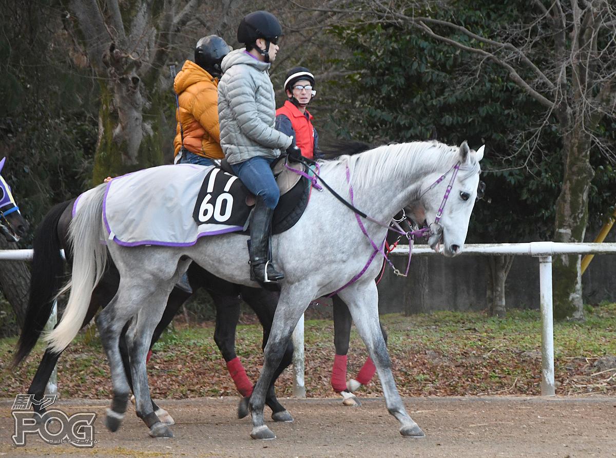 ムーンアンドスターの馬体写真