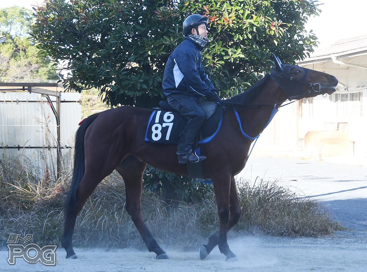 グッジョブハニーの馬体写真