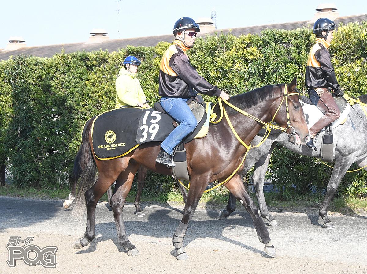 ヴァリアスシチーの馬体写真
