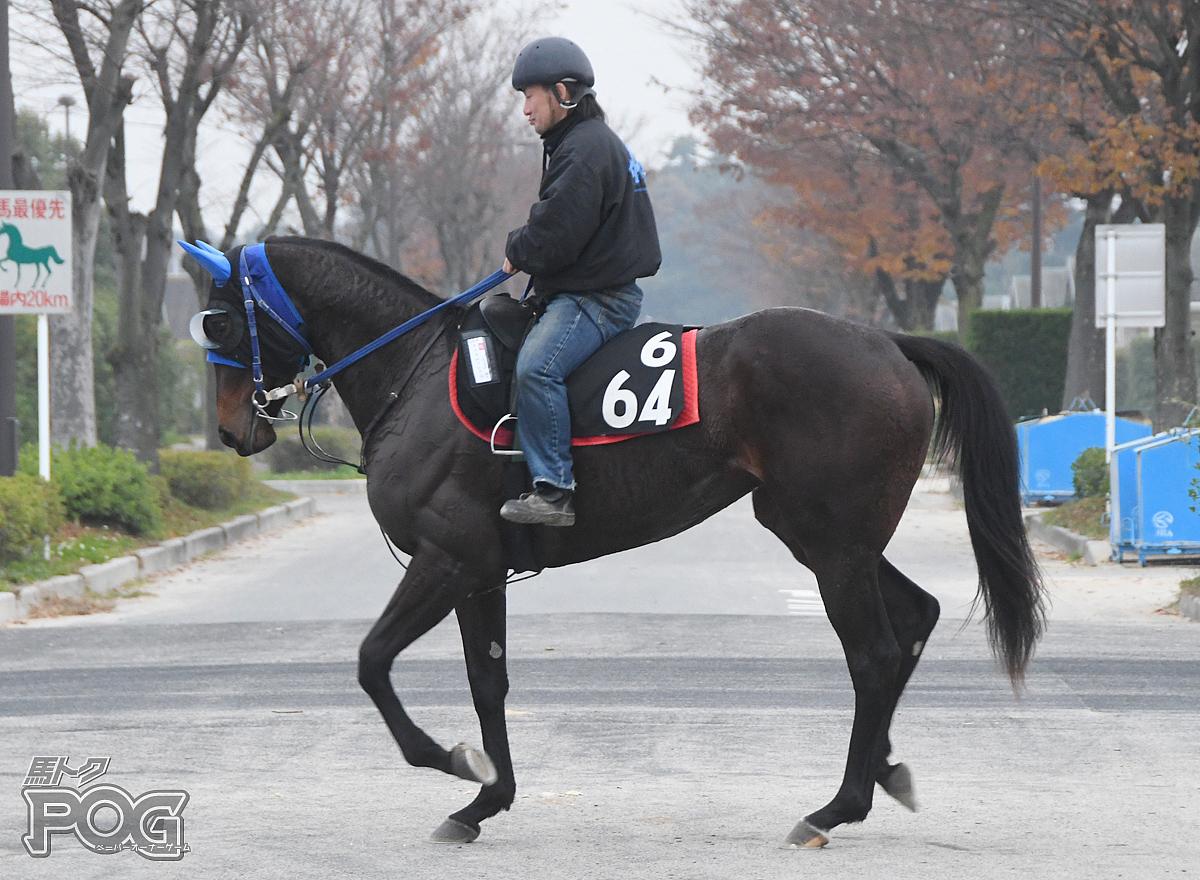 テイエムソレイユの馬体写真