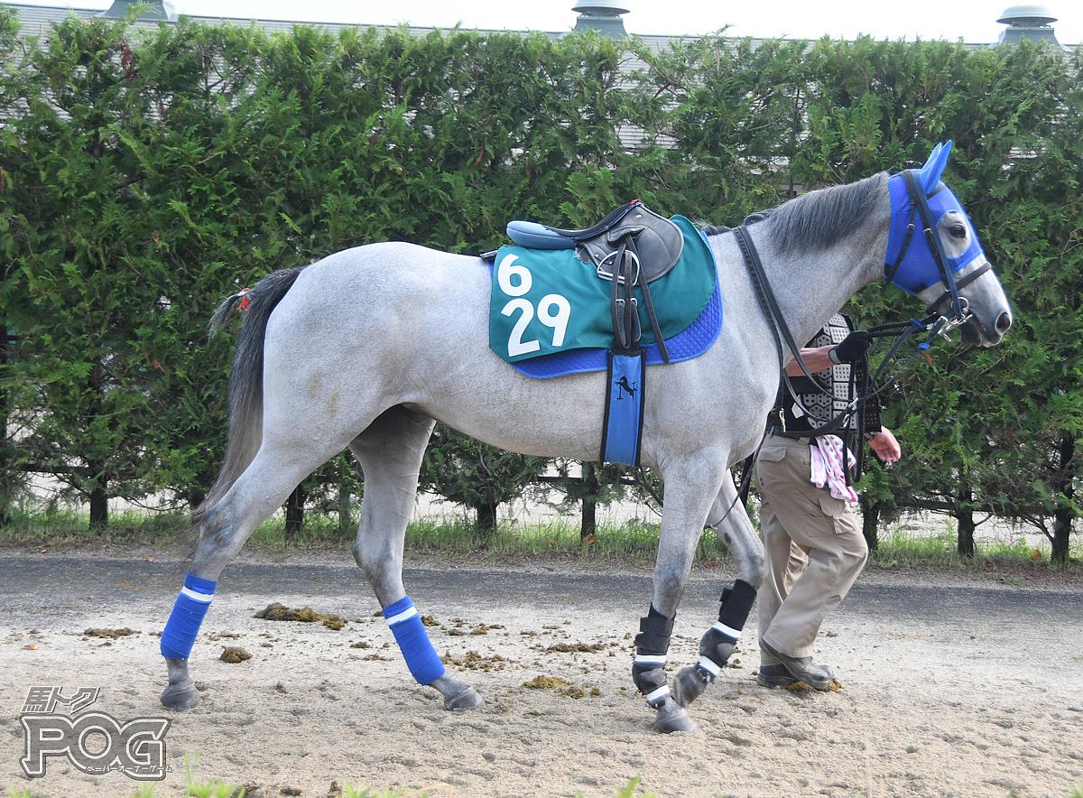 カネコメハナコヨの馬体写真
