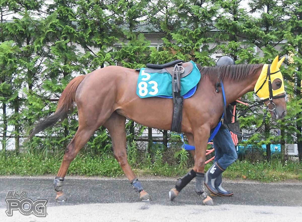 ナンゴクユメネットの馬体写真