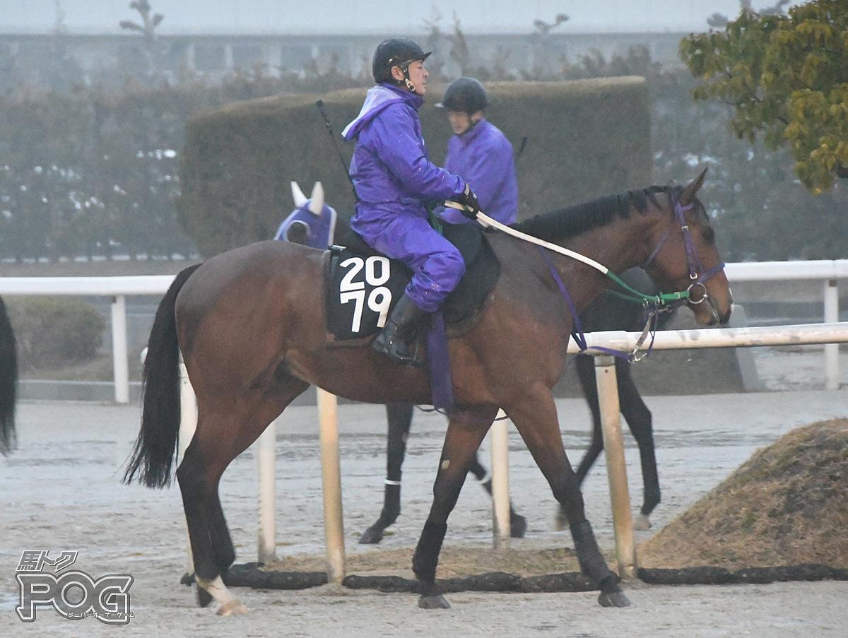 ジューンニードルの馬体写真