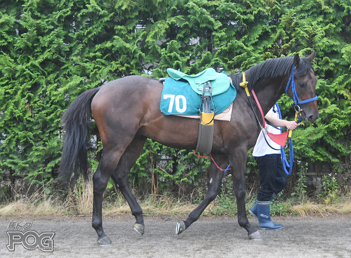 ソリストサンダーの馬体写真