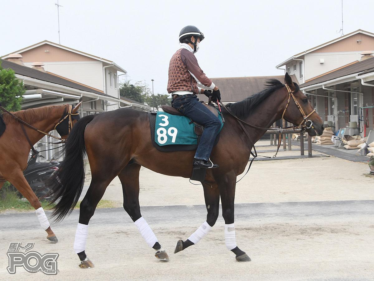 ゴッドスパロウの馬体写真