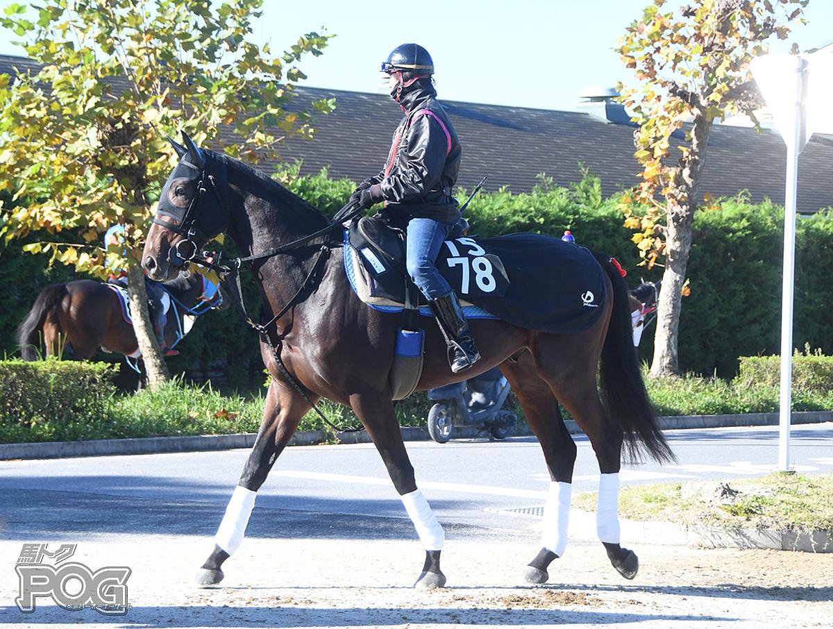 ヴィーヴァザキングの馬体写真