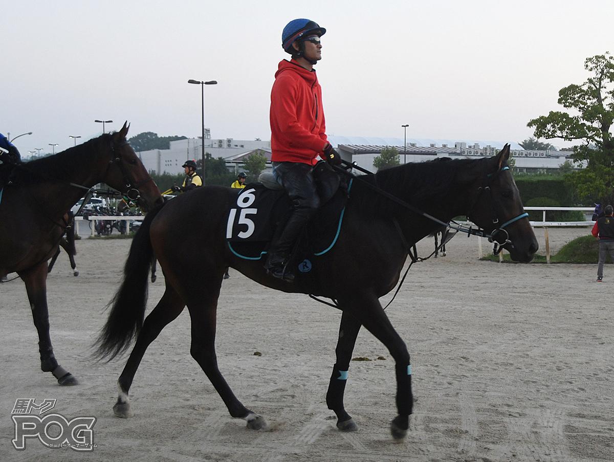 タマモカトルズの馬体写真