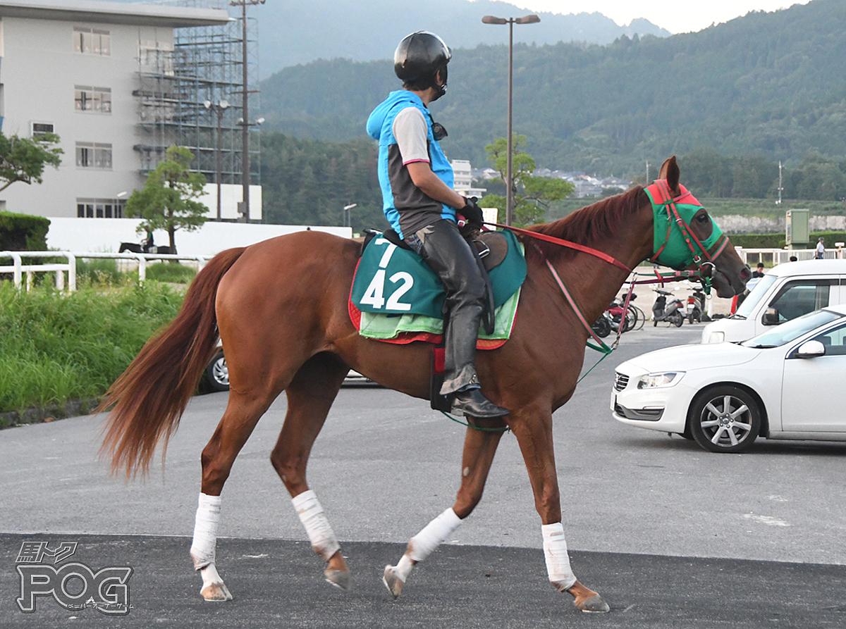 タマモオテンバの馬体写真
