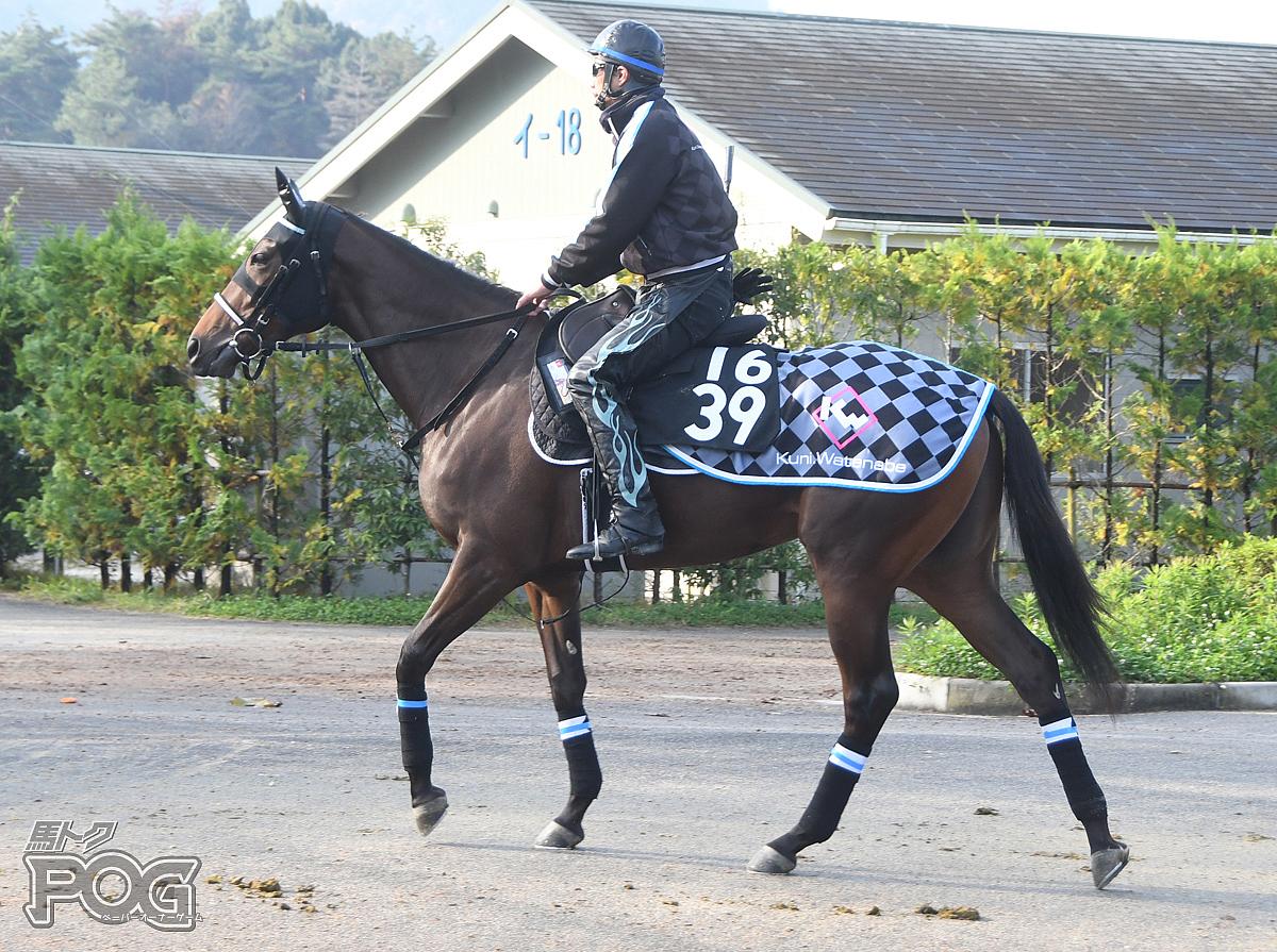 カシャーサの馬体写真