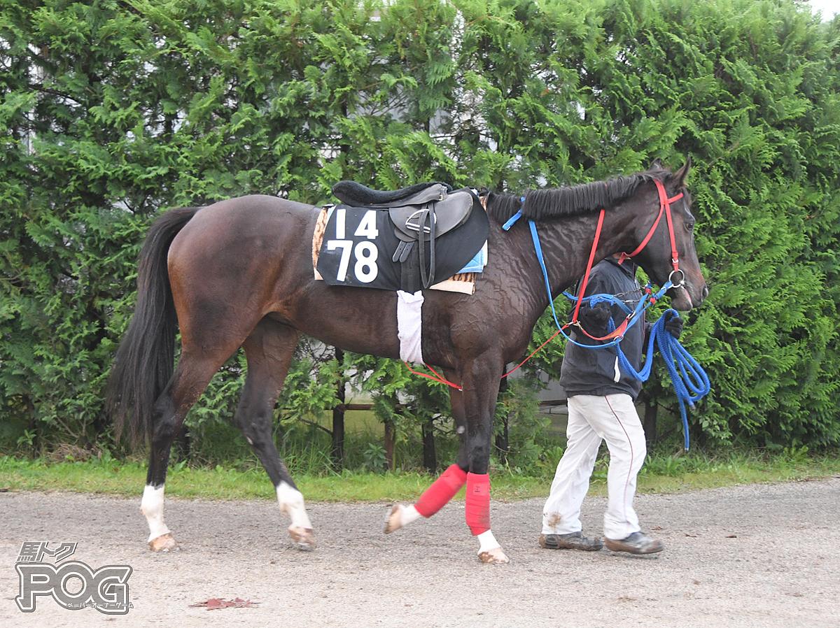 アチェンティの馬体写真