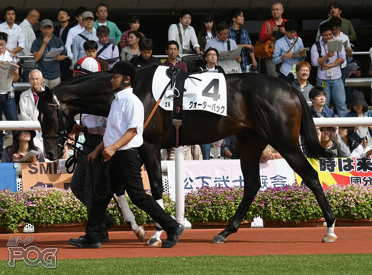 クォーターバックの馬体写真