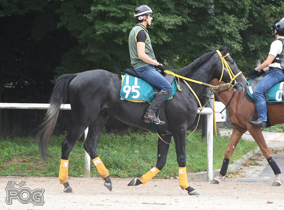 ライジングドラゴンの馬体写真