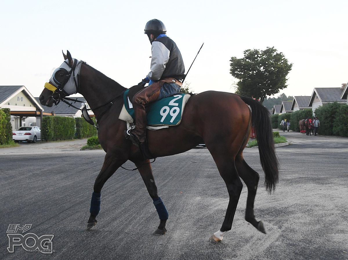 ウィズの馬体写真