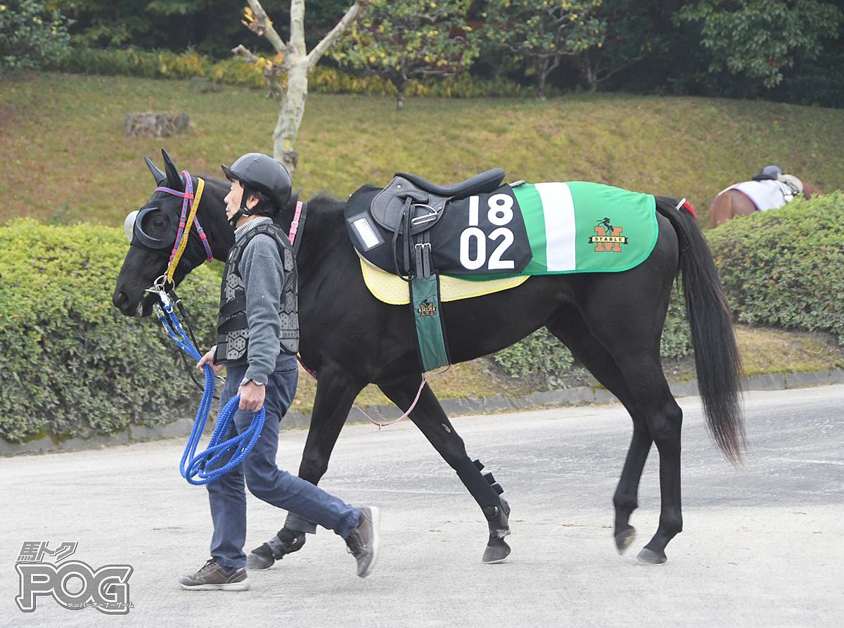 ギップフェルの馬体写真