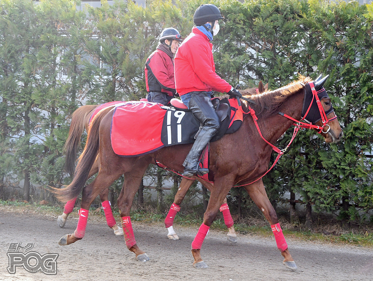 ダズリングジュエルの馬体写真