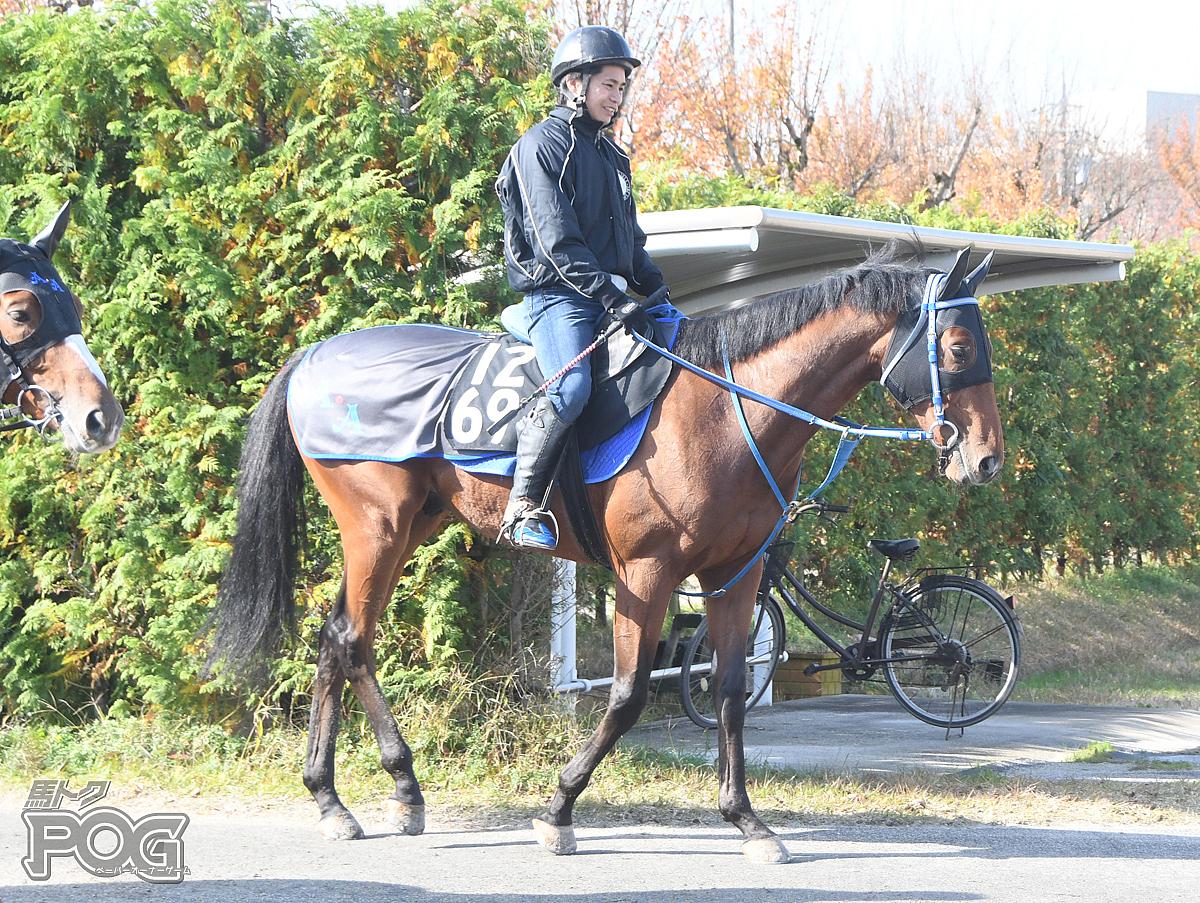 アフラマズダーの馬体写真