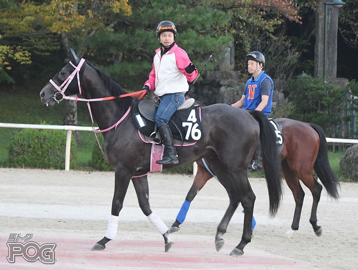 ショウナンマリブの馬体写真