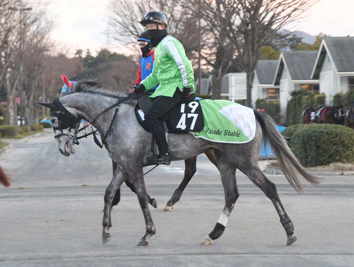 アリエッティの馬体写真