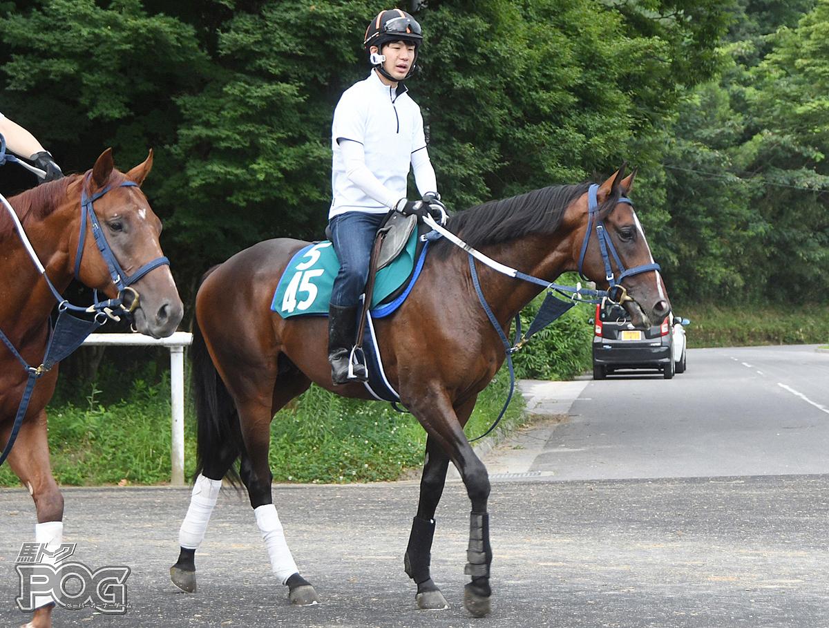 スプリングフライトの馬体写真