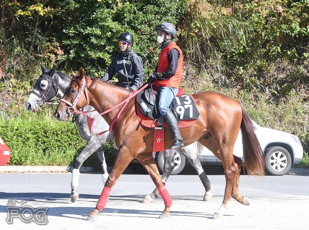 ティーエスプレッソの馬体写真