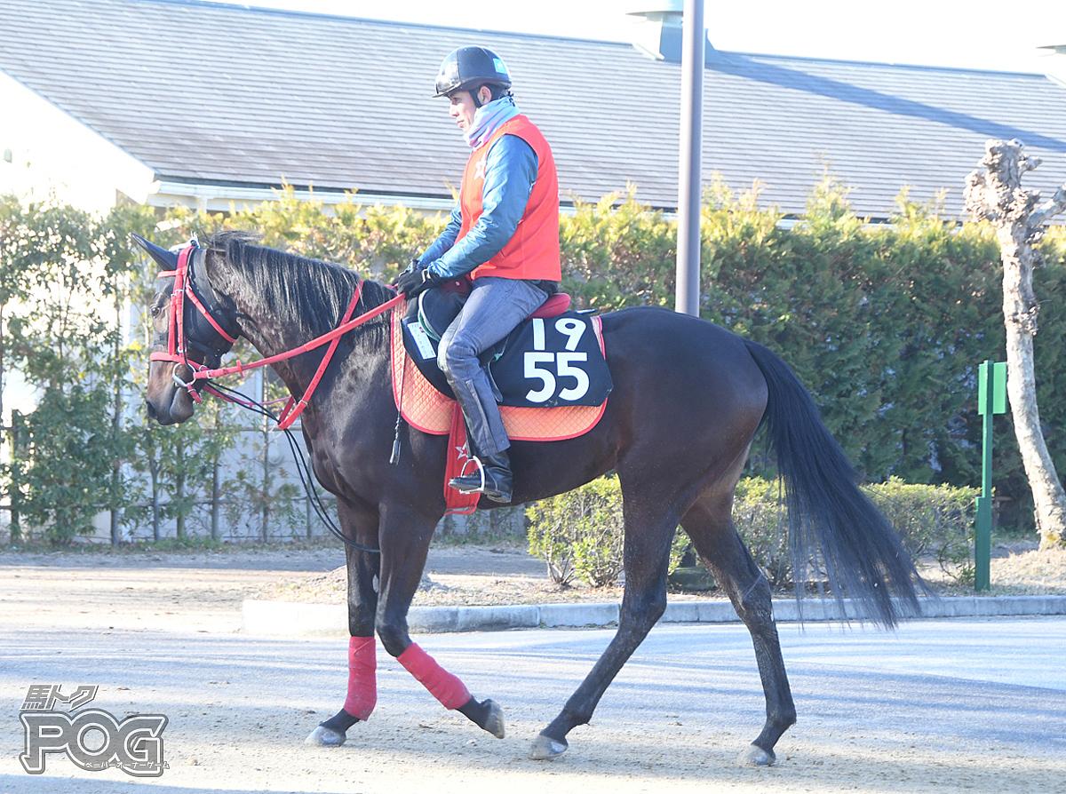 ティーアウリイの馬体写真