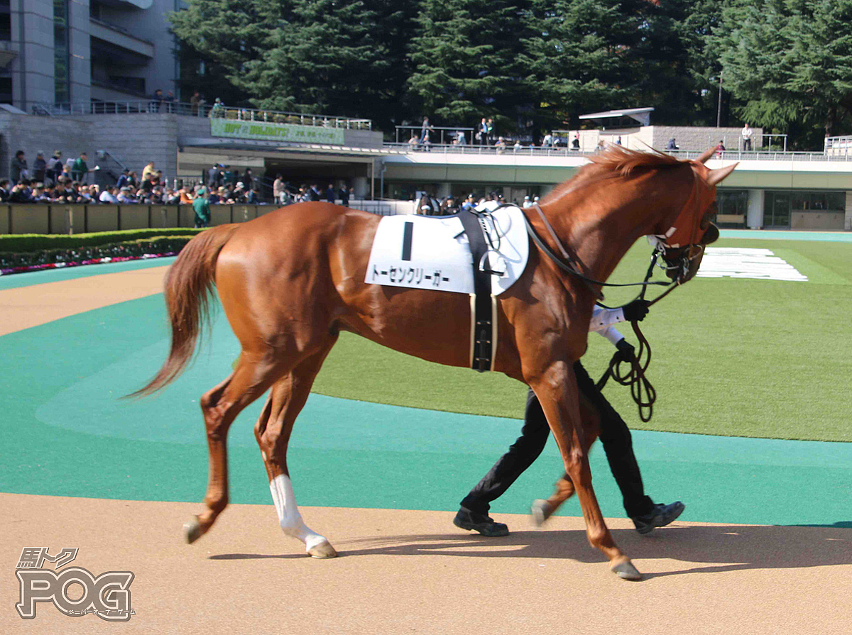 トーセンクリーガーの馬体写真