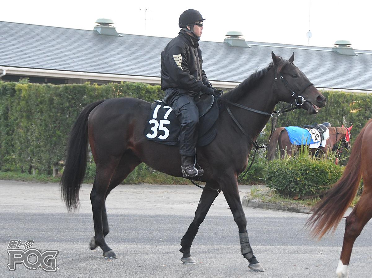 コーンススの馬体写真