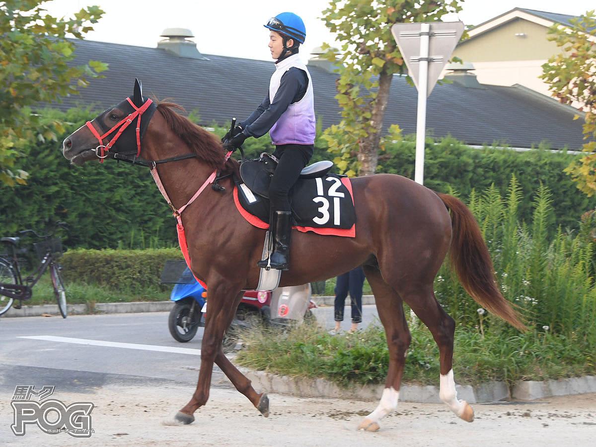ダイシンカローリの馬体写真