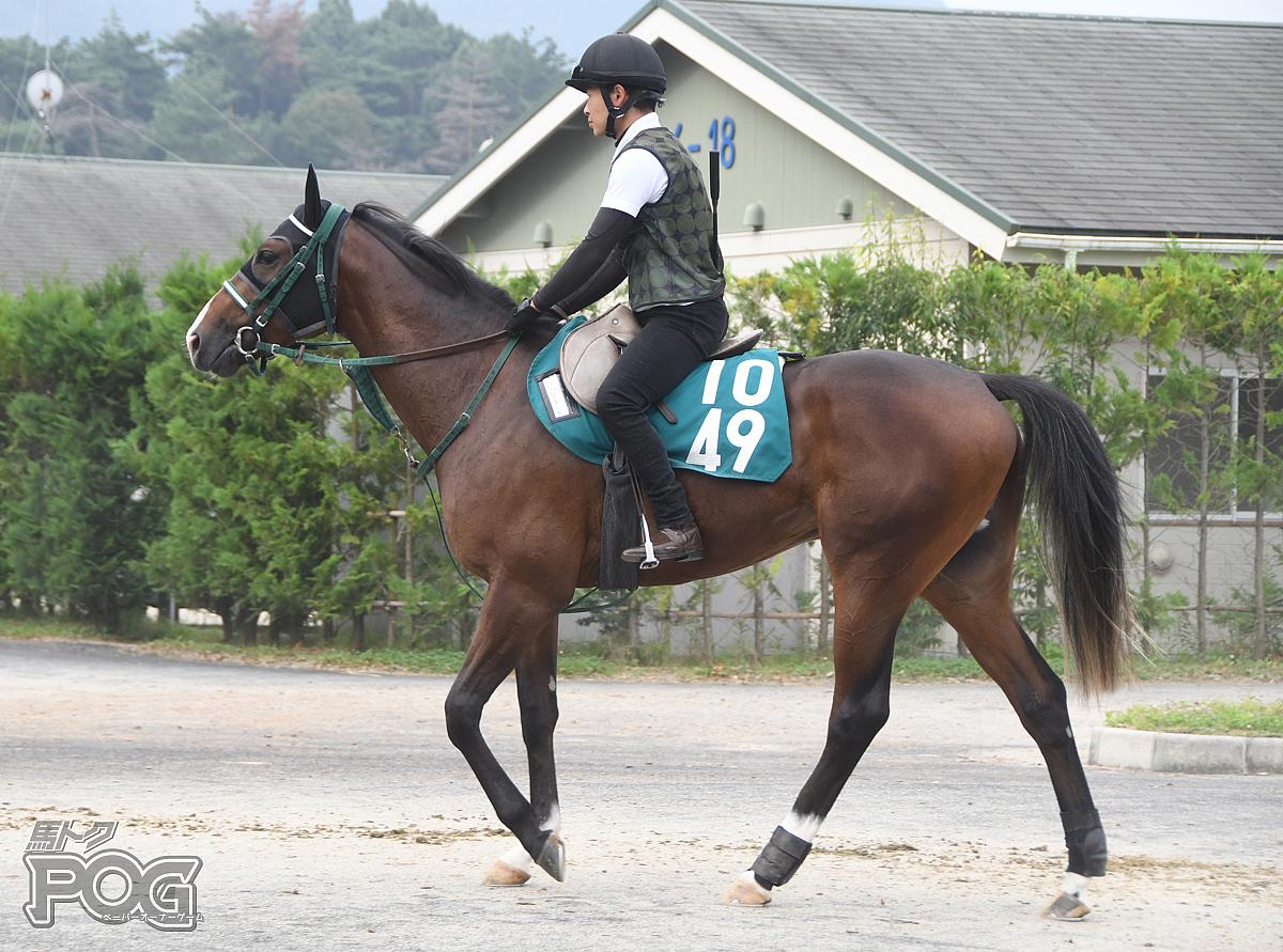 ロードアクシスの馬体写真