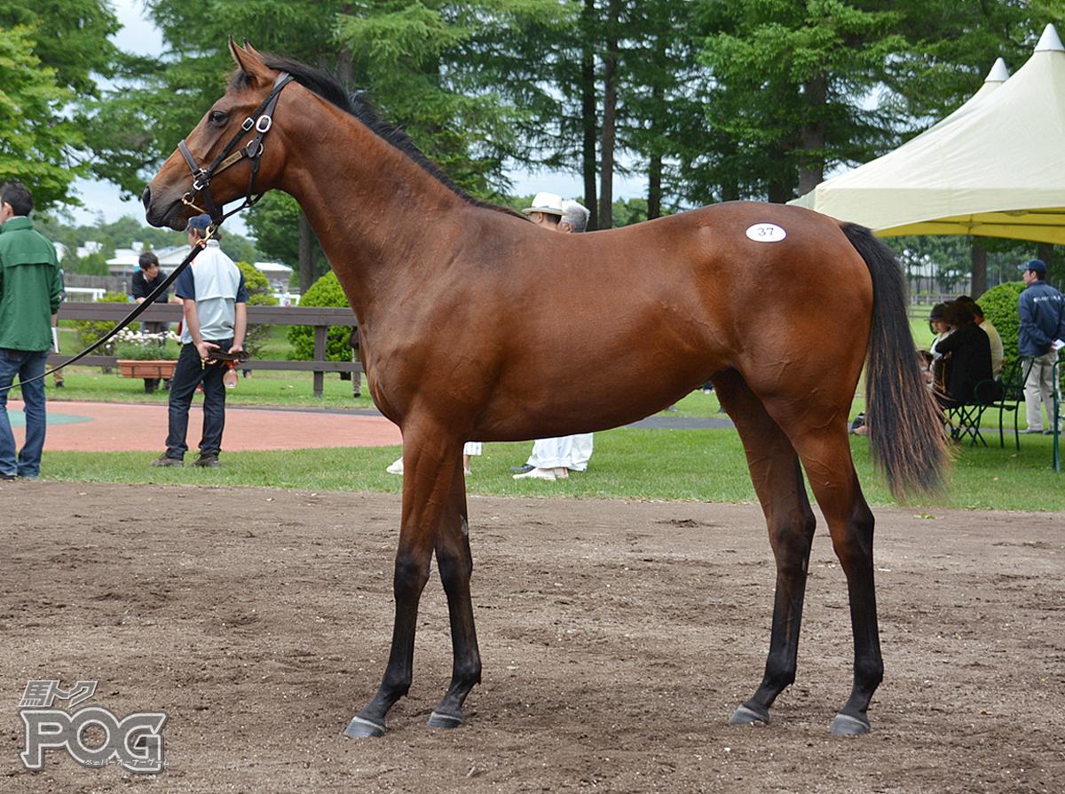 フロルセレジェイラの馬体写真