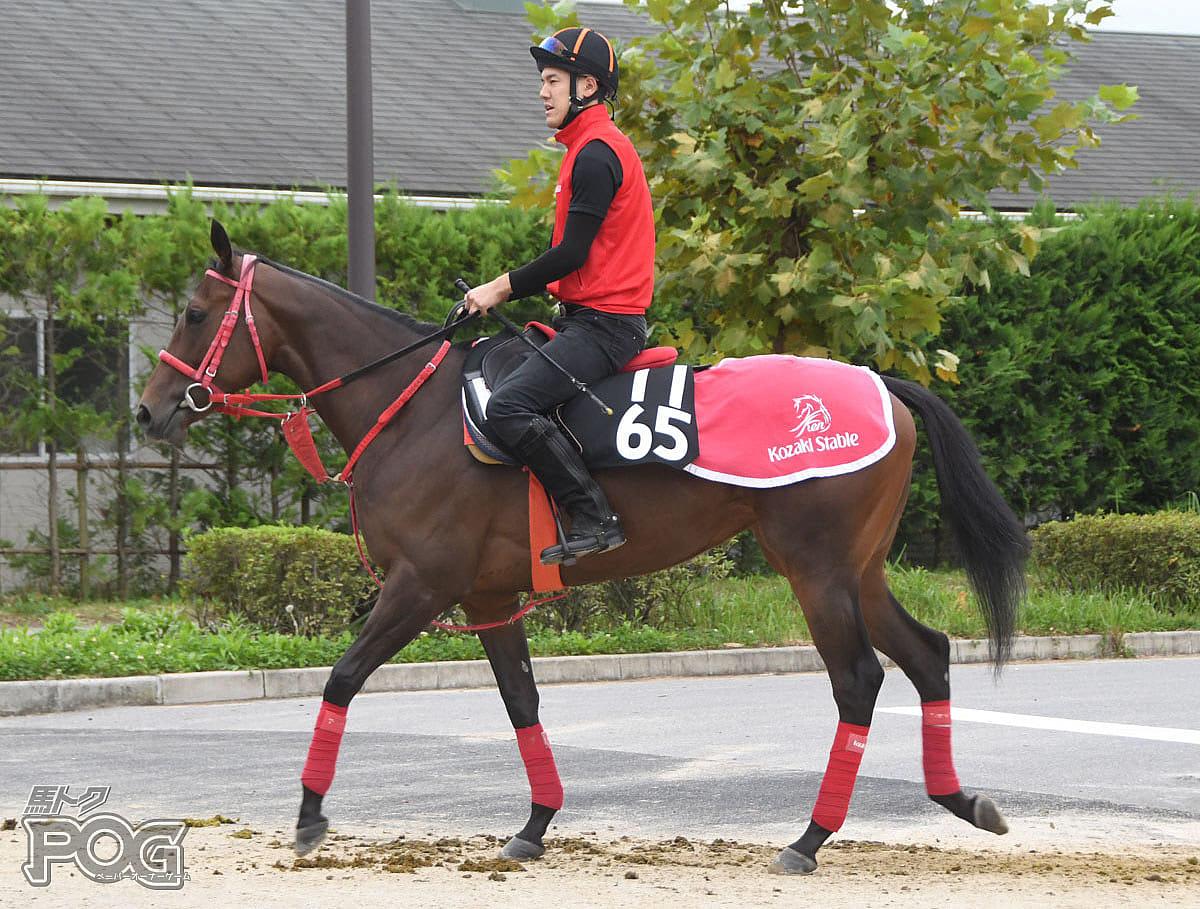 レナータの馬体写真