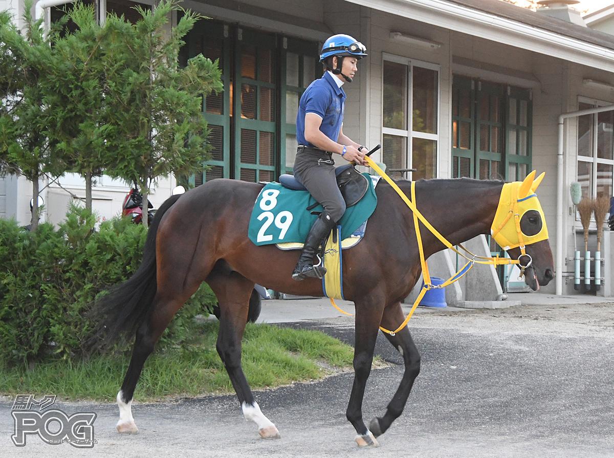 ウインサザンクロスの馬体写真