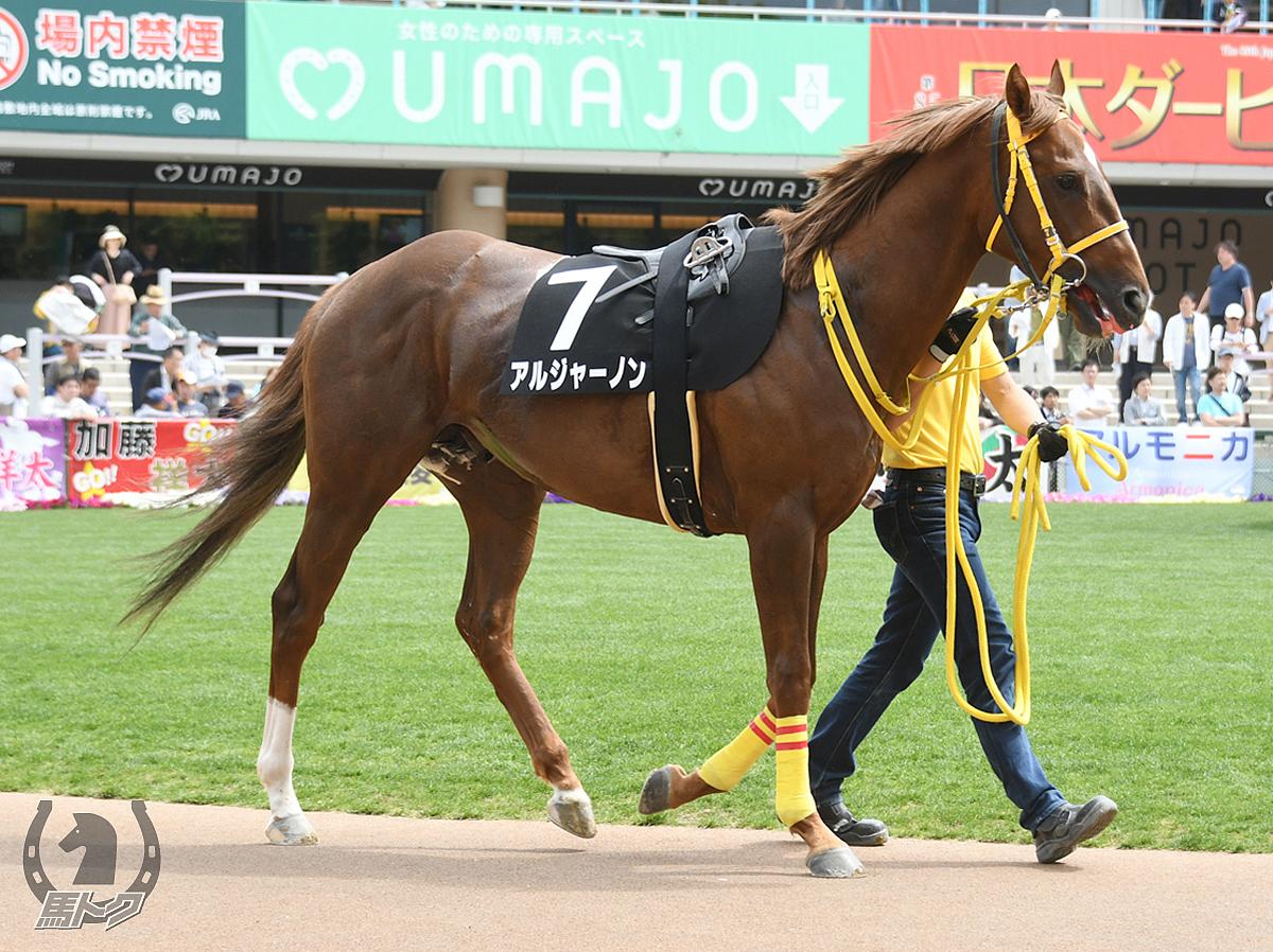 アルジャーノンの馬体写真