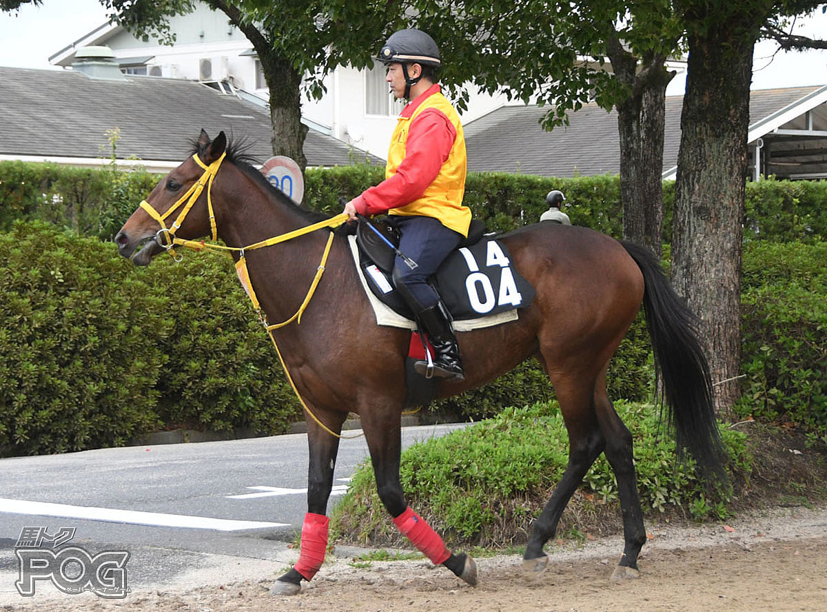 クリノフラゴナールの馬体写真