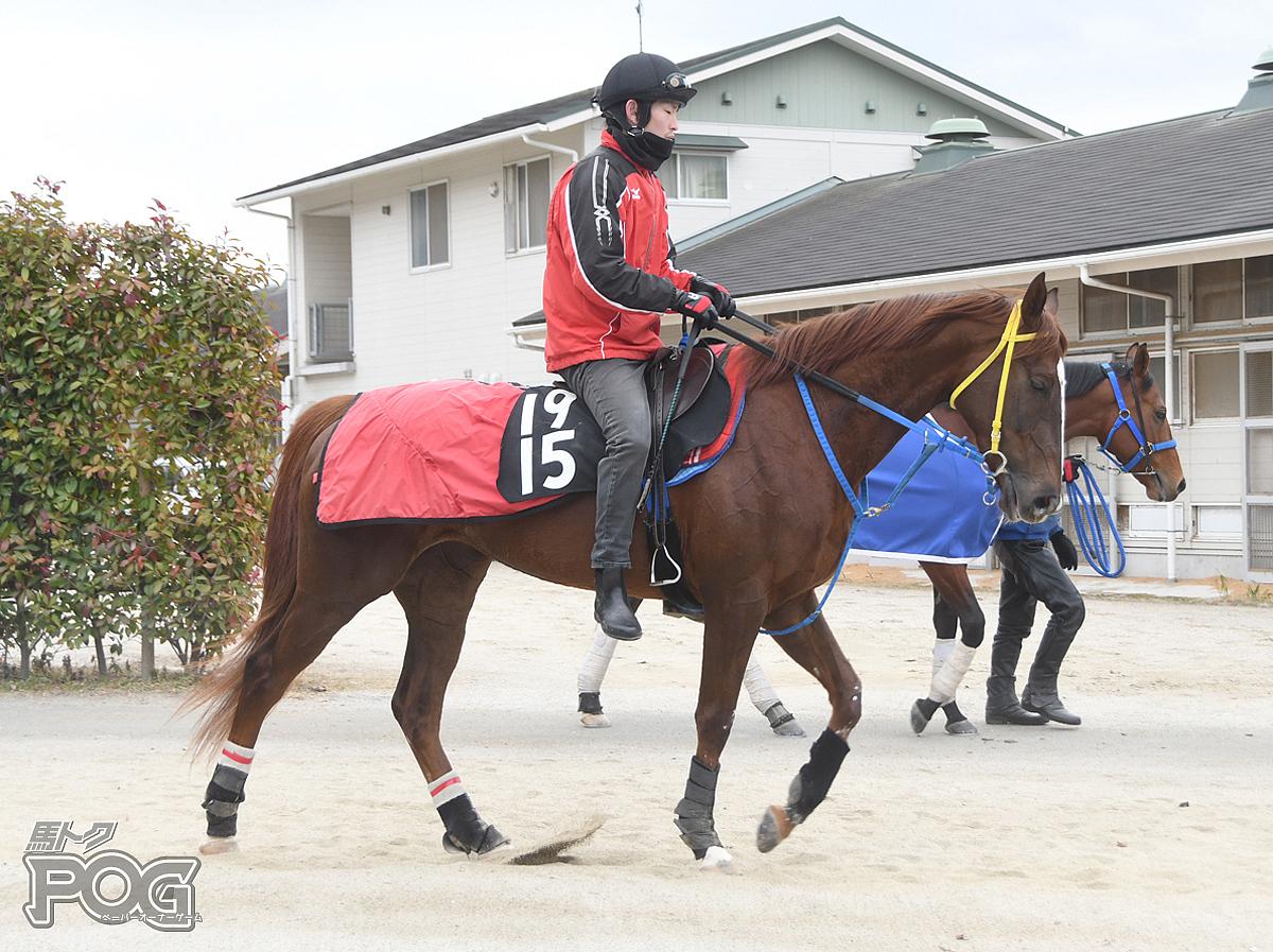 クリノカーロの馬体写真