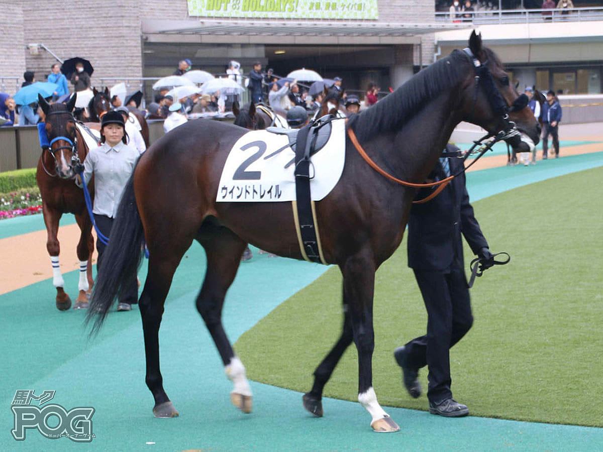 ウインドトレイルの馬体写真