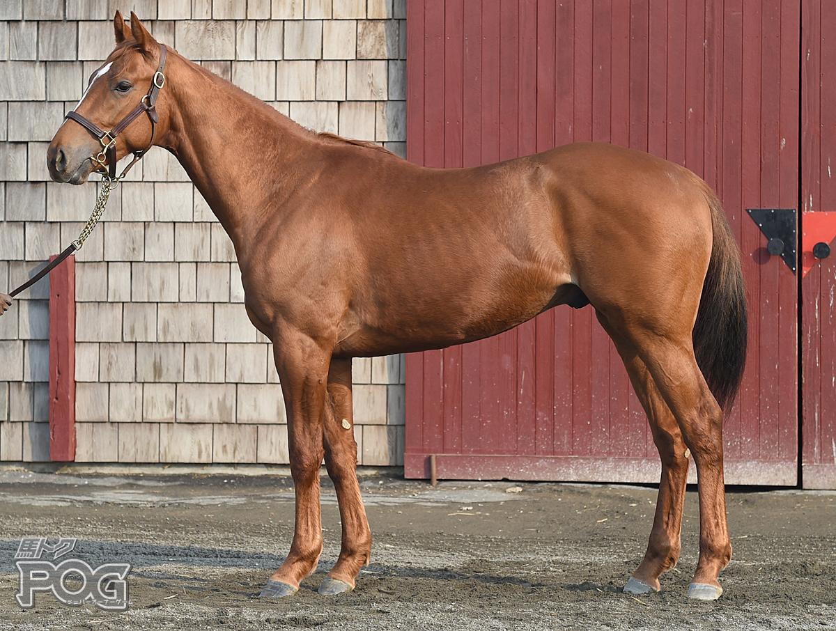 モリトディライトの馬体写真