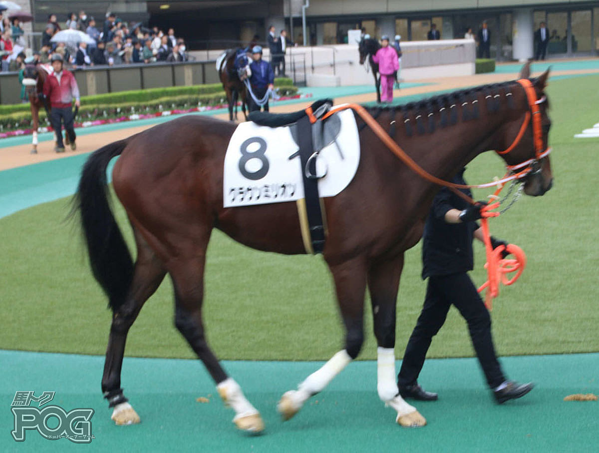 クラウンミリオンの馬体写真