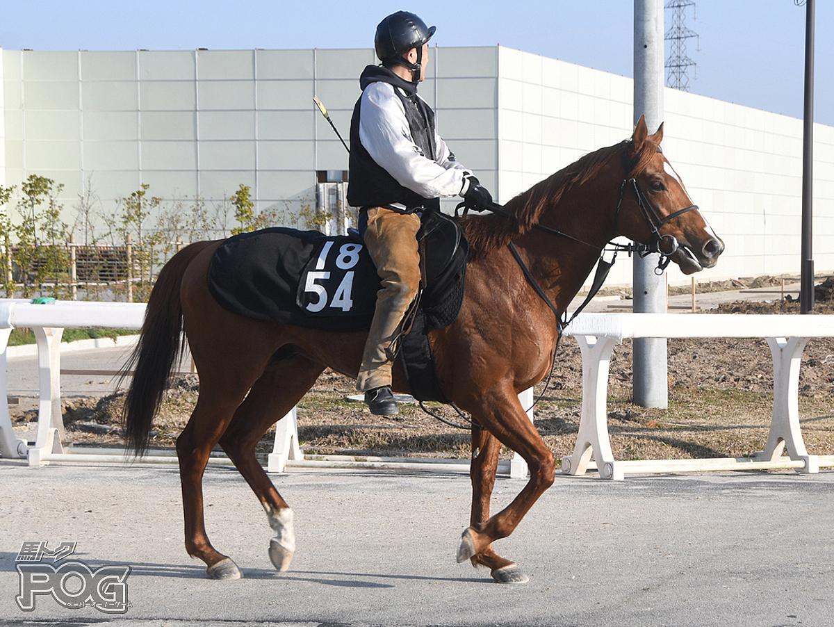 サンワラワラの馬体写真