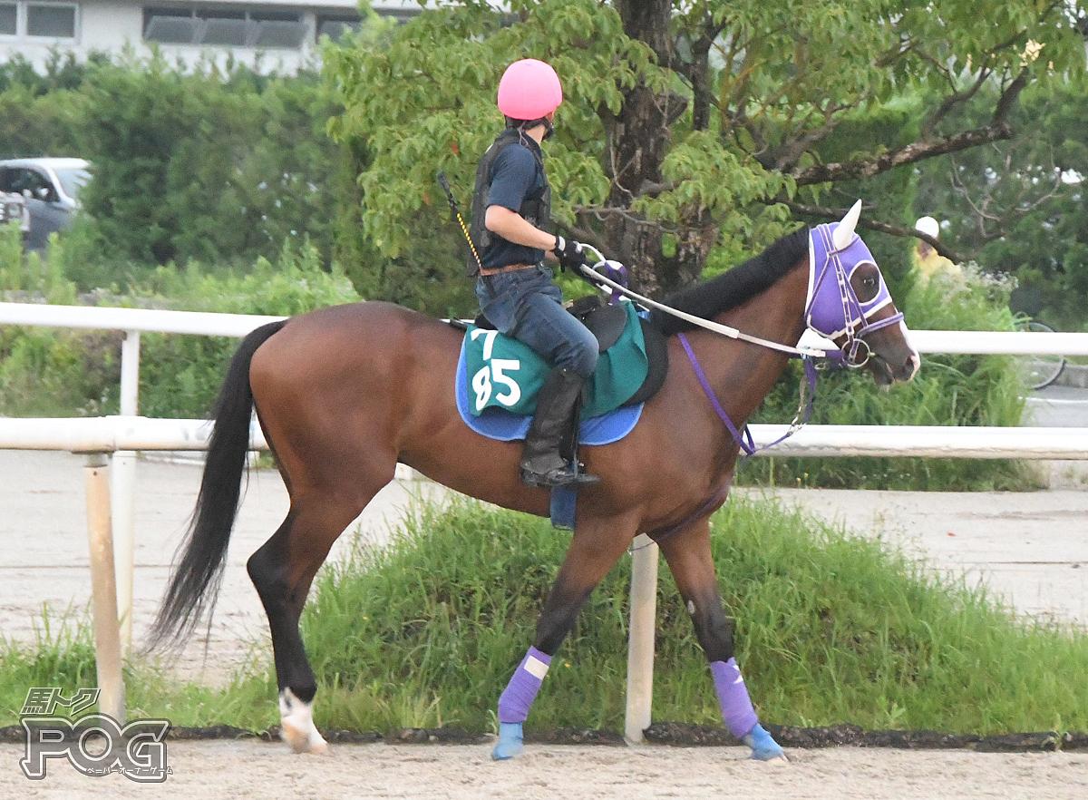 ロイヤルパールスの馬体写真