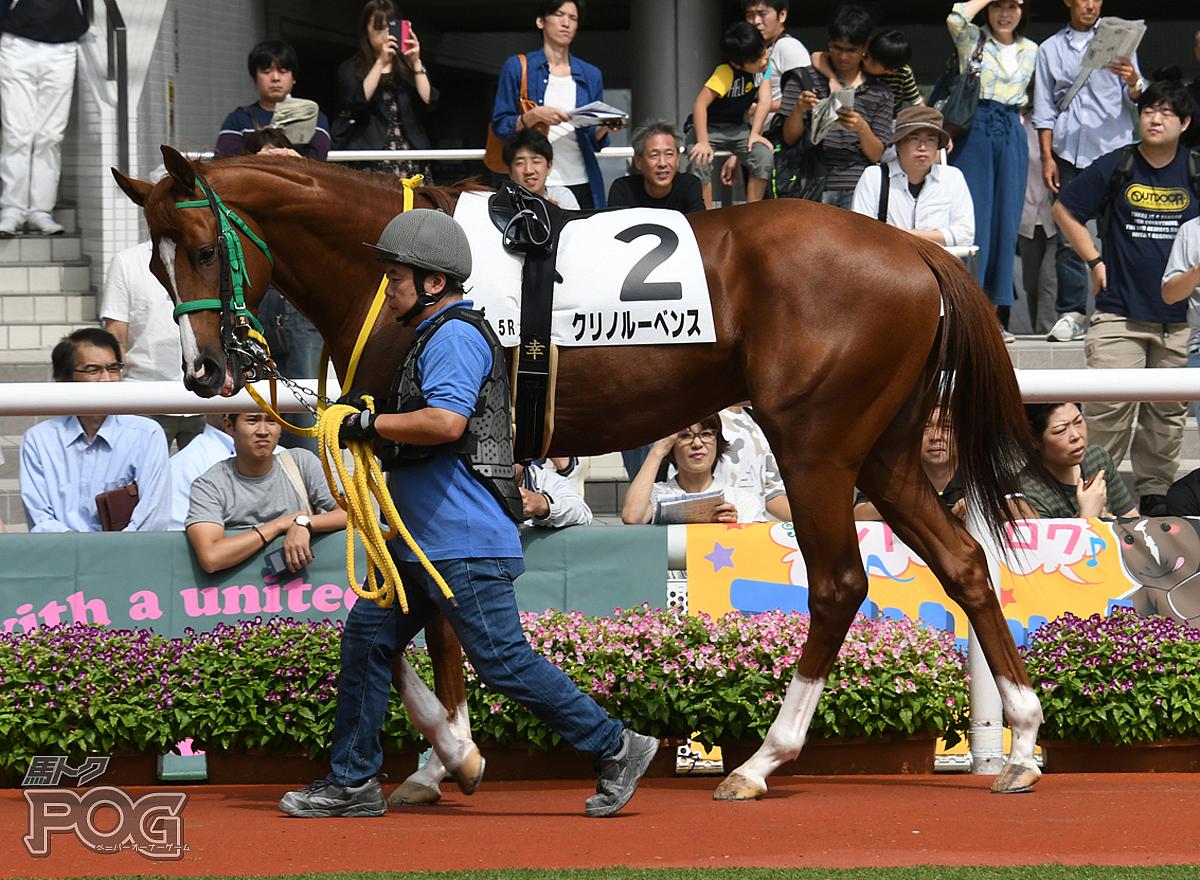 クリノルーベンスの馬体写真