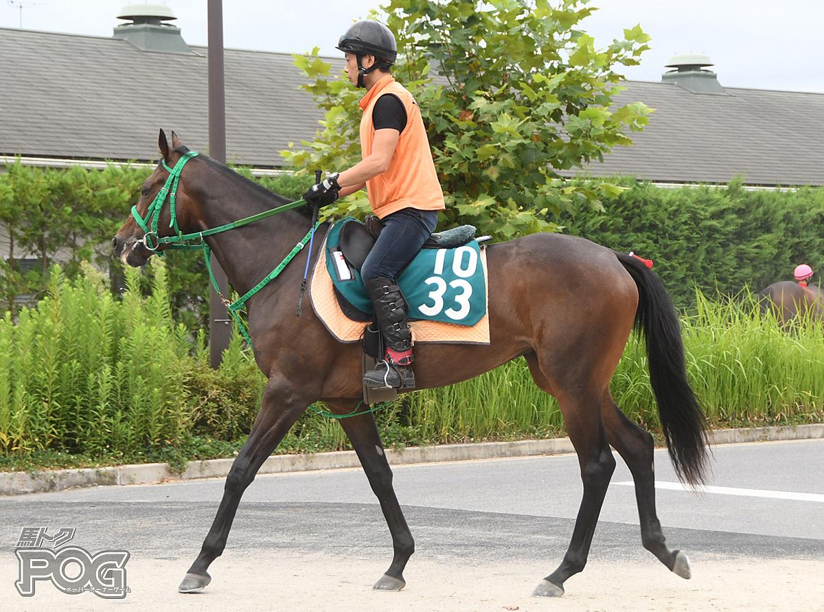 アンジェラの馬体写真