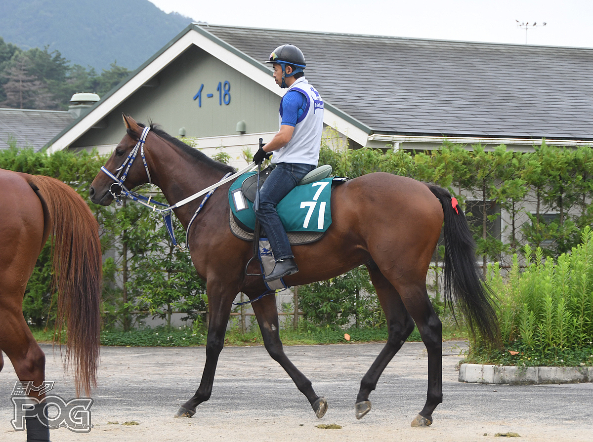 リバプールタウンの馬体写真